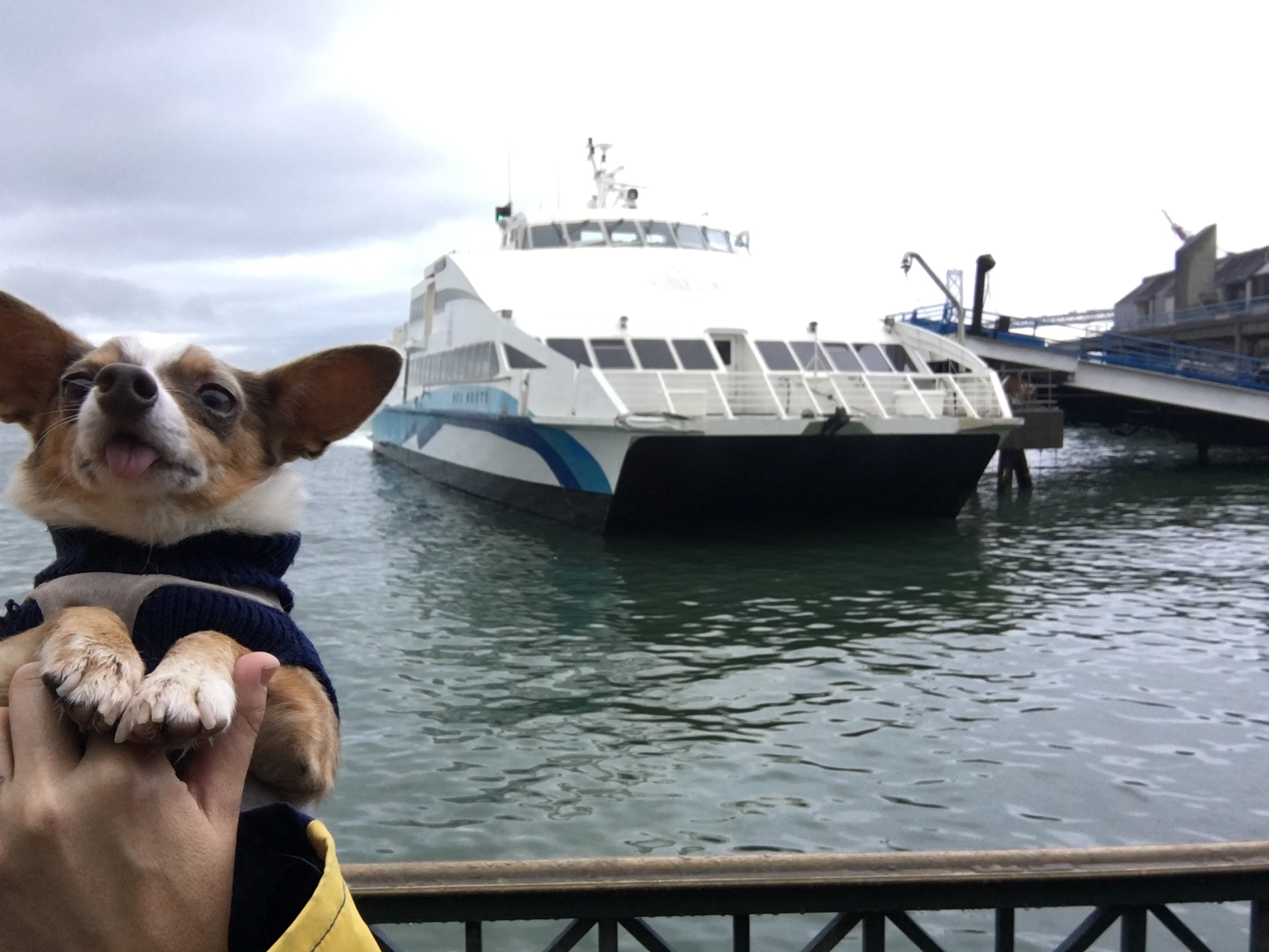 Stimpy at the ferry