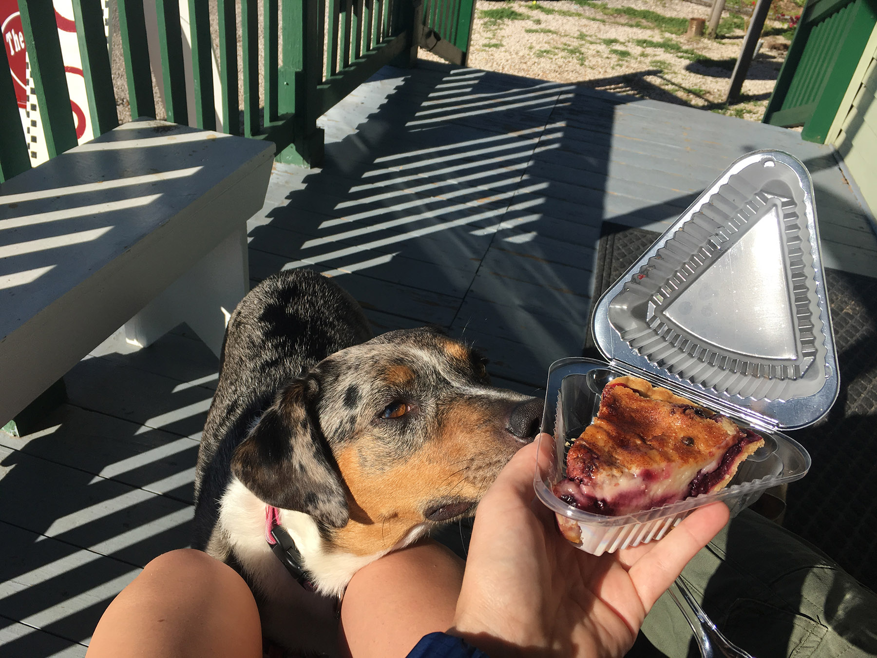 Lily smells pie
