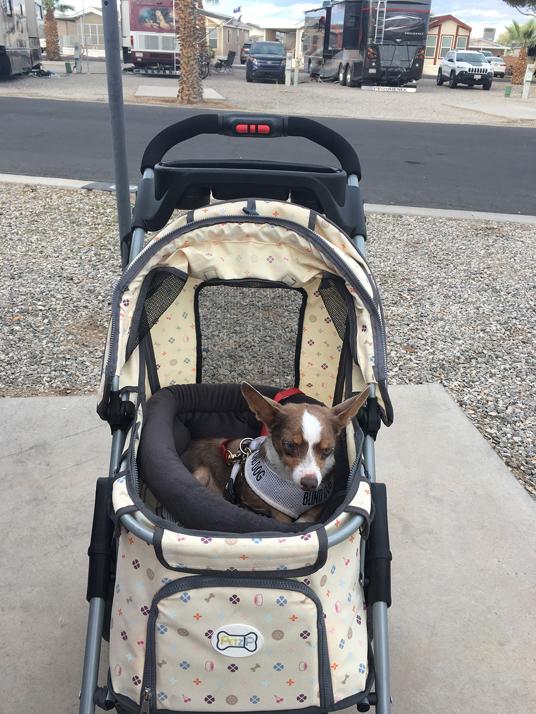 Stimpy in his stroller