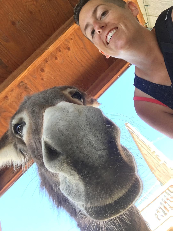 Burro selfie