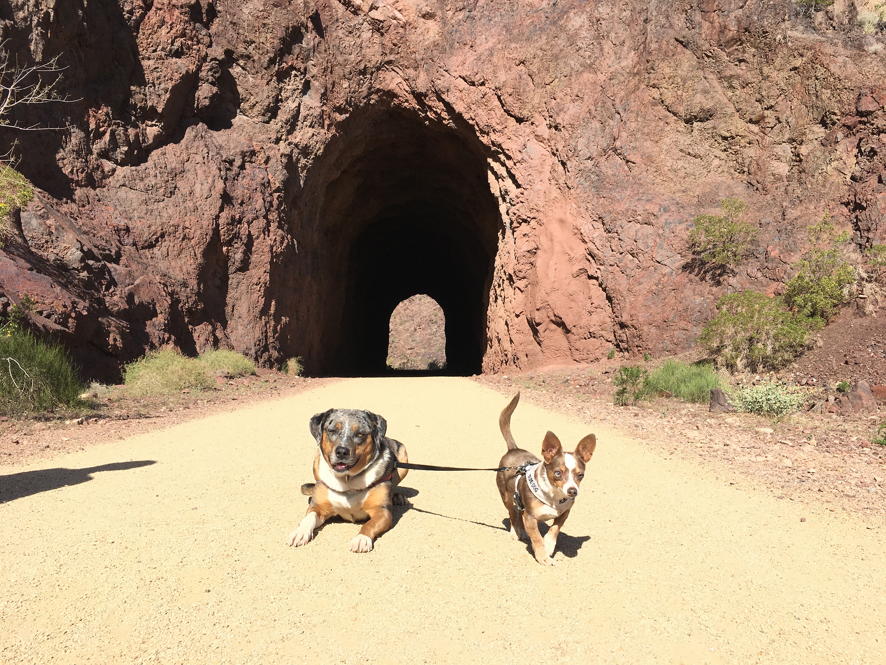 Lily & Stimpy in front of a tunnel