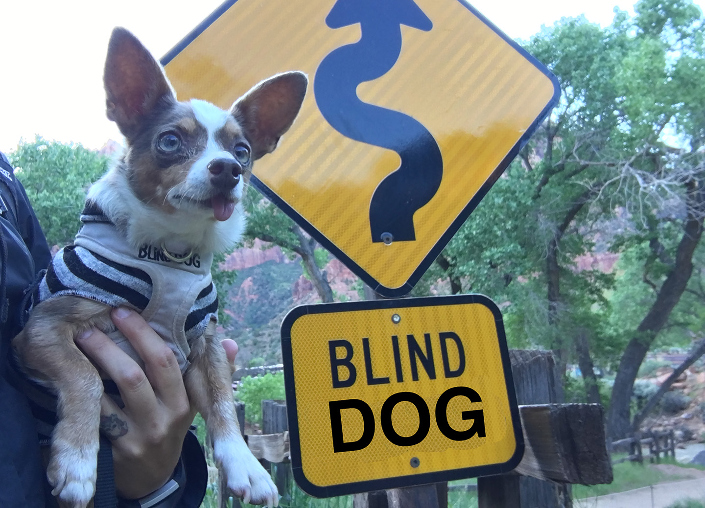Blind dog Stimpy