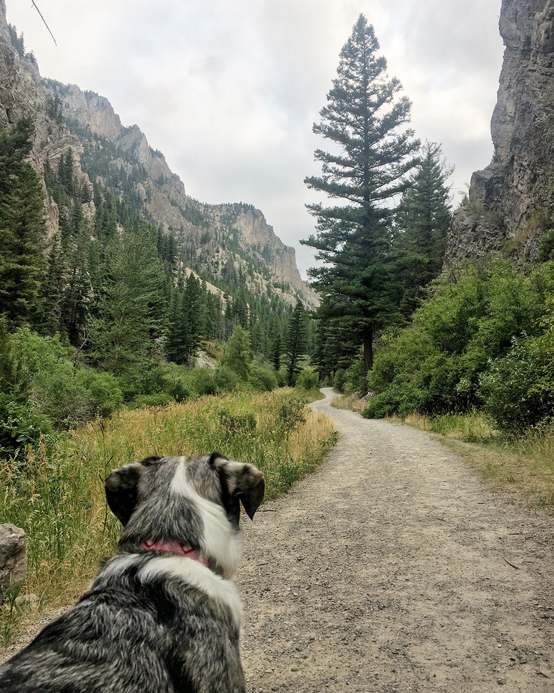 Lily looking at the trail