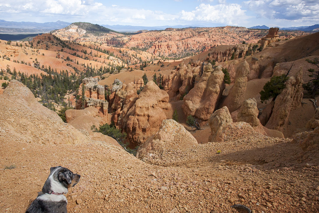 Lily looking at hoodoos