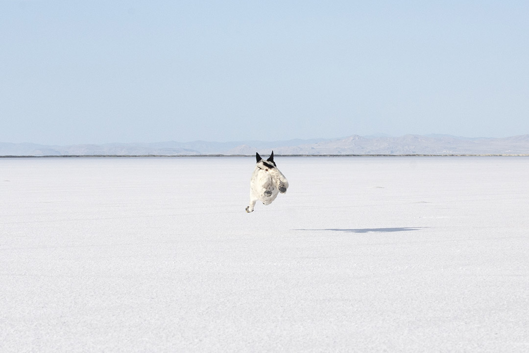 Mushy flying across the salt flat