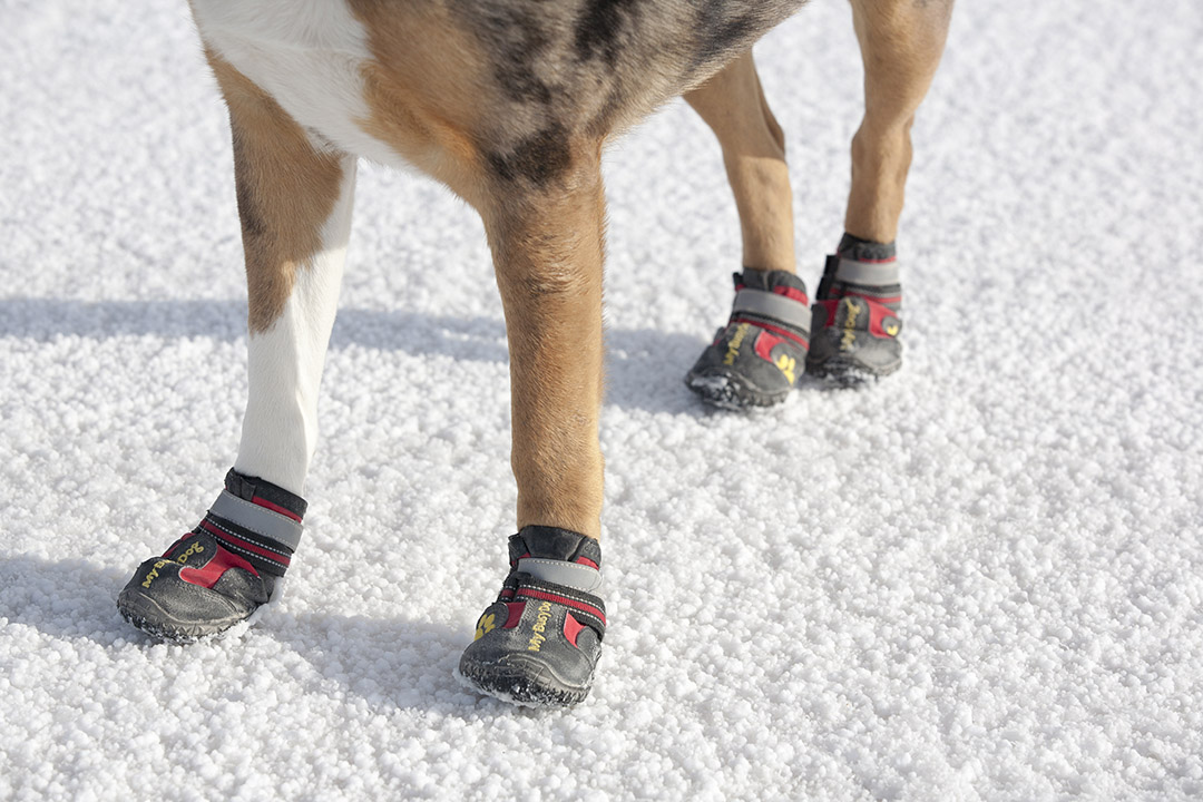 Lily's dog booties