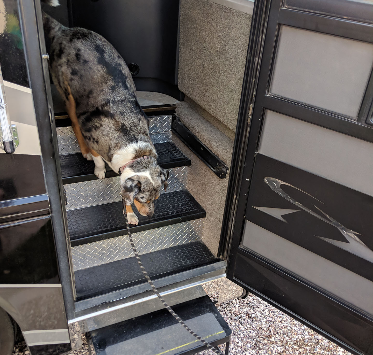 Lily walking down the stairs