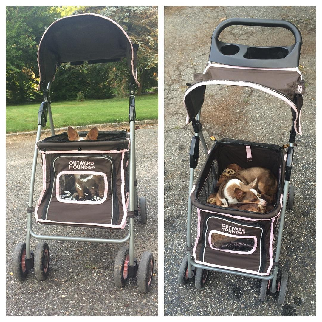 Outward Hound pet stroller