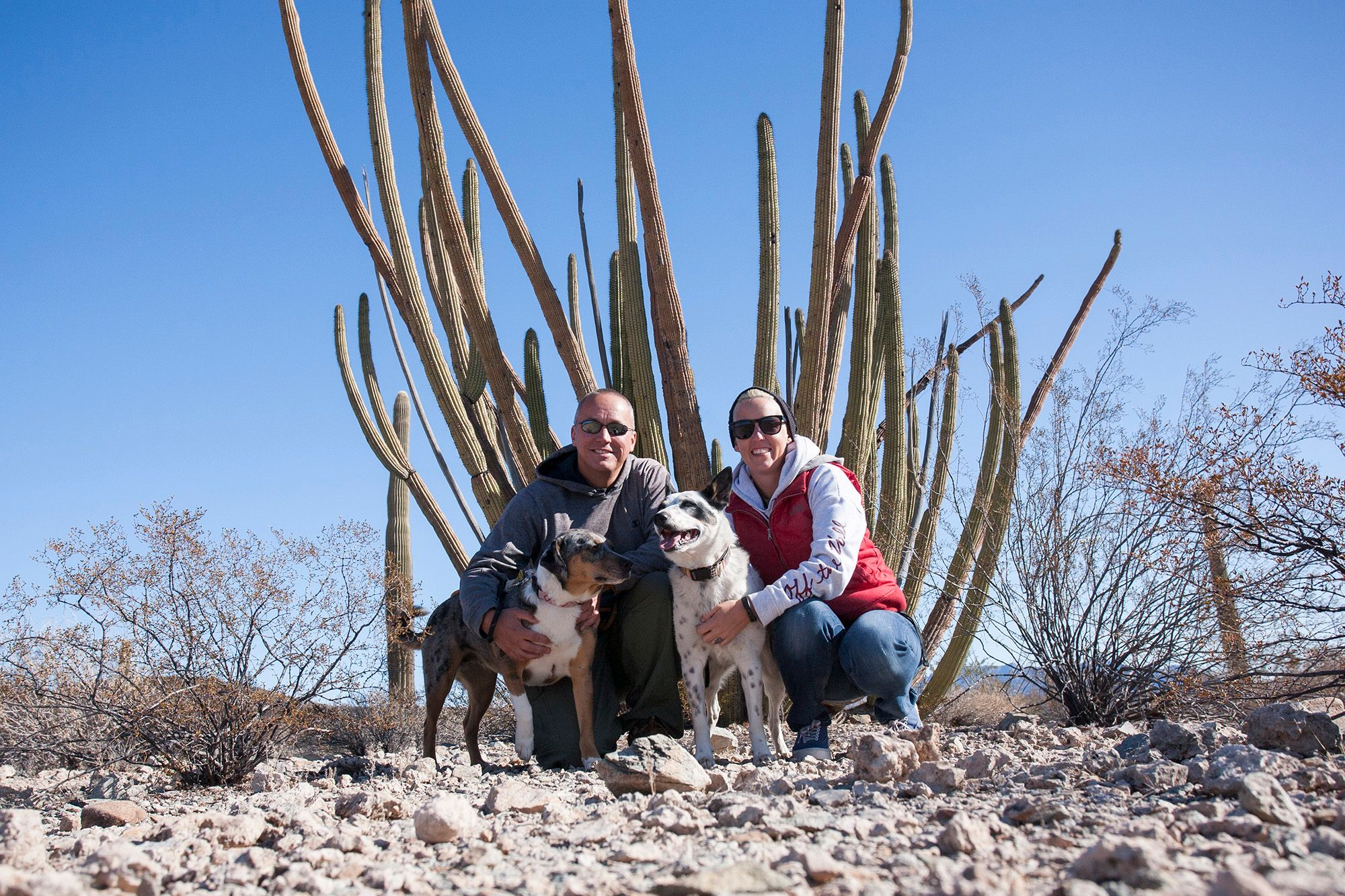 Organ Pipe Cactus National Monument:  Day Trip with Dogs