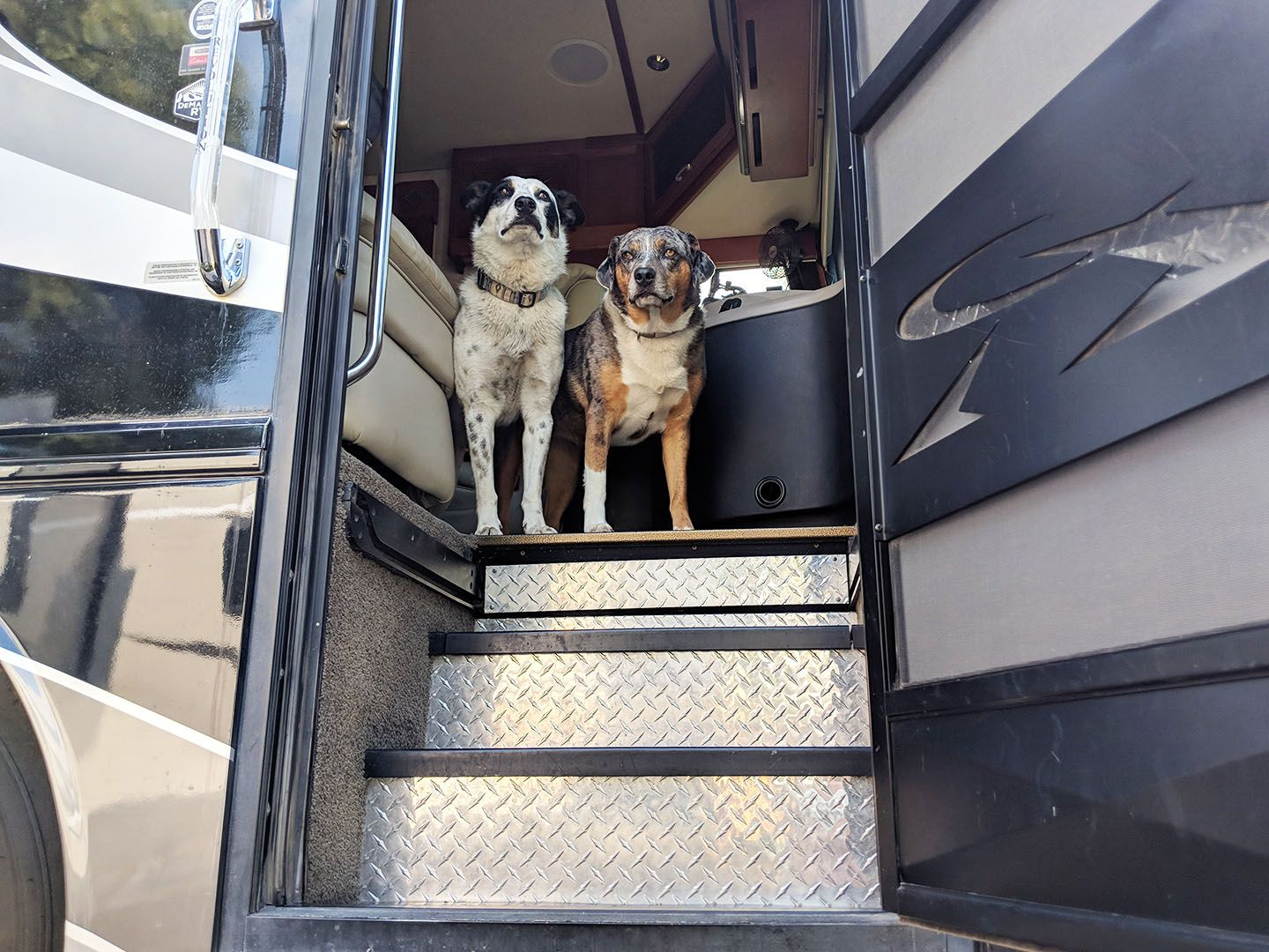 How-to: Teach your dog to wait at the RV door