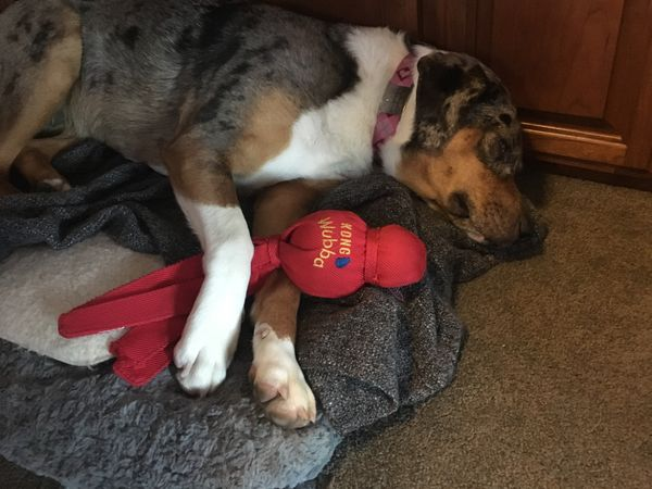 Dog toy review: Wubba