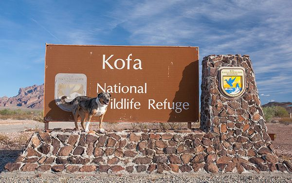 Campsite Review: Kofa National Wildlife Refuge