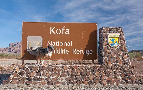 Campsite Review: Kofa National Wildlife Refuge