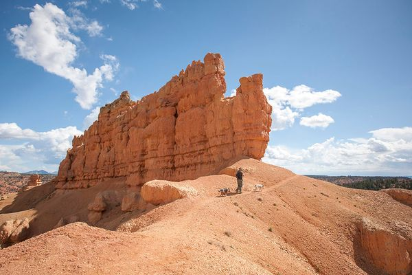 Red Canyon, Utah: Your Dog-Friendly Alternative to Bryce Canyon National Park