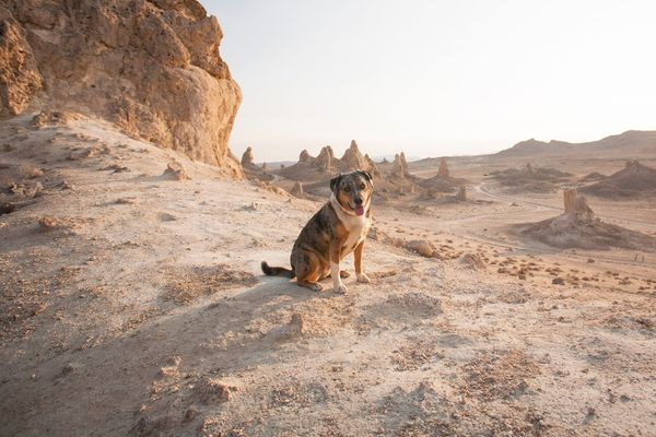 A Dog-Friendly Day at Trona Pinnacles