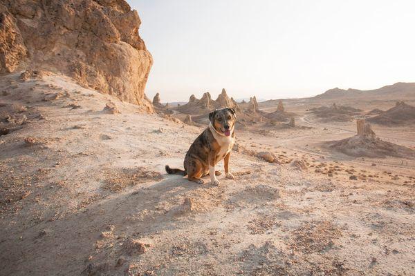 A Dog-Friendly Day at Trona Pinnacles