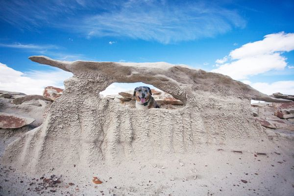 Dog-Friendly Day Trip to New Mexico's Bisti Badlands