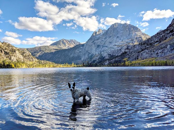 Dog-Friendly Adventures along US 395 in California